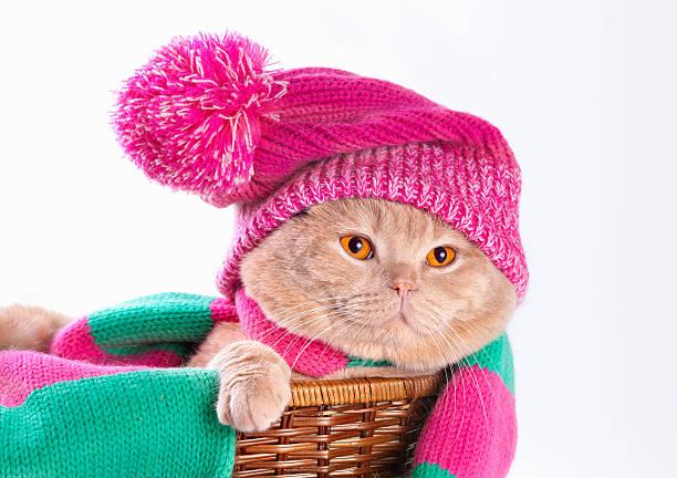 Cat wearing a pink hat picture id178023338?b=1&k=6&m=178023338&s=612x612&w=0&h=lqyauiun2zob7qhjof2fzlu 7so1nyzvgqozoq0vloa=