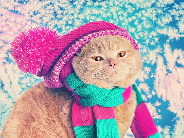 Cat wearing a pink knitting hat and picture id485037394?b=1&k=6&m=485037394&s=612x612&w=0&h= nxbmtdhfa6q adknm mtmfz3o99zd6d2kbwvjcs ke=