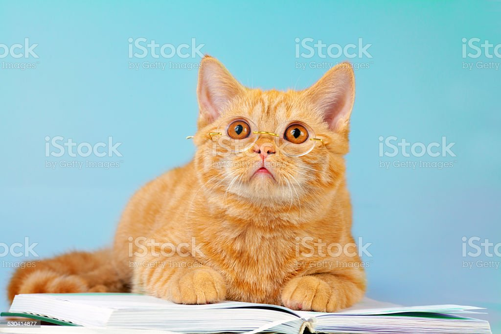 Cat wearing glasses lays on book stock photo