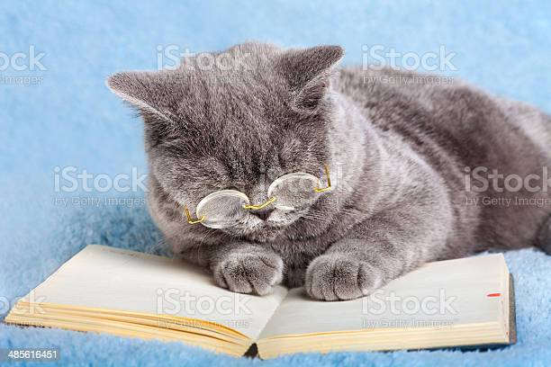 Cat wearing glasses reading a book picture id485616451?b=1&k=6&m=485616451&s=612x612&h=obyywu ntxm yg8ndjy2y 54k9gx8ajawl4u2330oye=