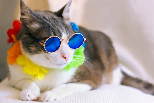 Cat wearing rounded retro sunglasses and garland picture id1270224355?b=1&k=6&m=1270224355&s=612x612&w=0&h=bervivmcycdg07nkgnqhr7ayr76dspfq1mi qtx2pow=
