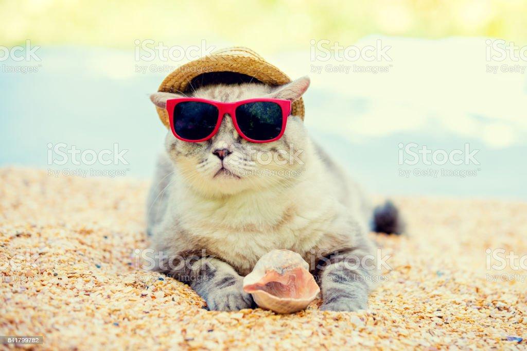 Katze trägt Sonnenbrille und Sonnenhut Entspannung am Strand – Foto