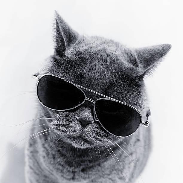 Cat wearing sunglasses stock photo