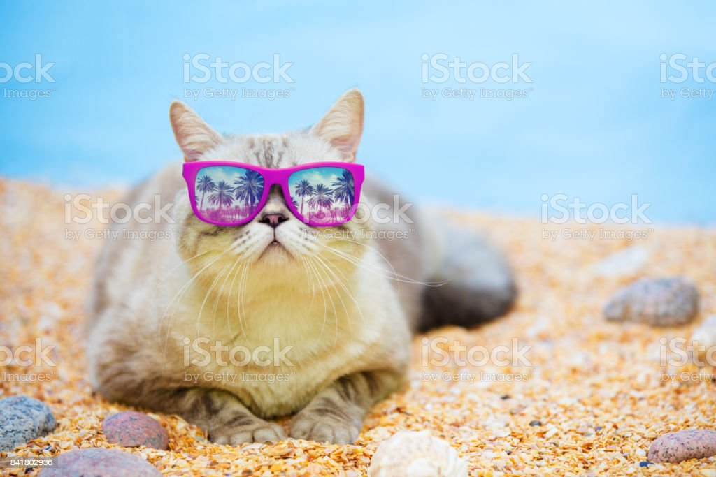 Katze mit Sonnenbrille Entspannung am Strand – Foto