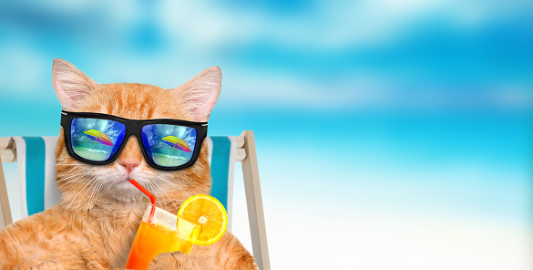 Cat wearing sunglasses relaxing sitting on deckchair.