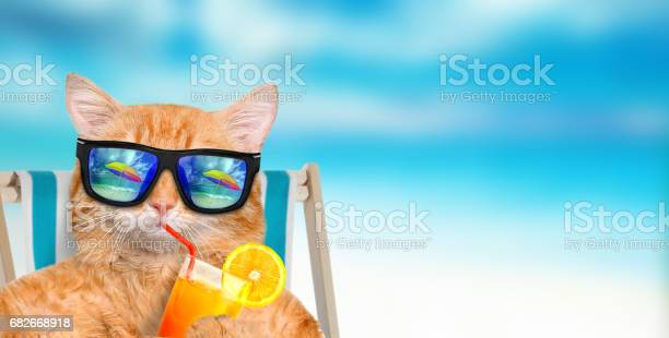 Cat wearing sunglasses relaxing sitting on deckchair picture id682668918?b=1&k=6&m=682668918&s=612x612&h=aathlslevwkzkvw9vpqwxqyutfjwo2xafpijlu9kn 8=