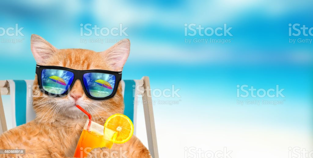 Cat wearing sunglasses relaxing sitting on deckchair. stock photo