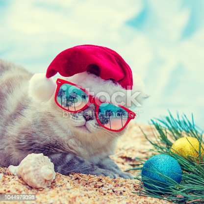 Cat wearing sunglasses with the reflection of palm trees relaxing on the beach. Cat wearing Santa hat. Christmas concept