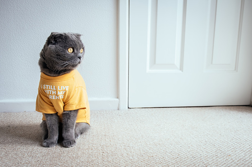 """Cat wearing T-shirt with """"I still live with my parents"""" slogan"""