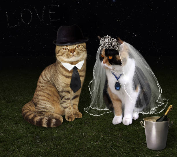 Royalty free cat wedding pictures images and stock photos istock cat wedding 1 stock photo junglespirit Images