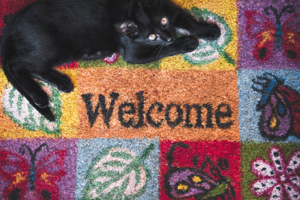Cat welcome home. - foto stock