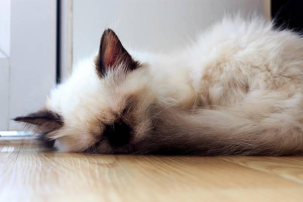 Cat which sleeps picture id620391730?b=1&k=6&m=620391730&s=612x612&w=0&h=gkr7 vz9zau4rr51x ehh9or kuxtyulrj wd3j n20=