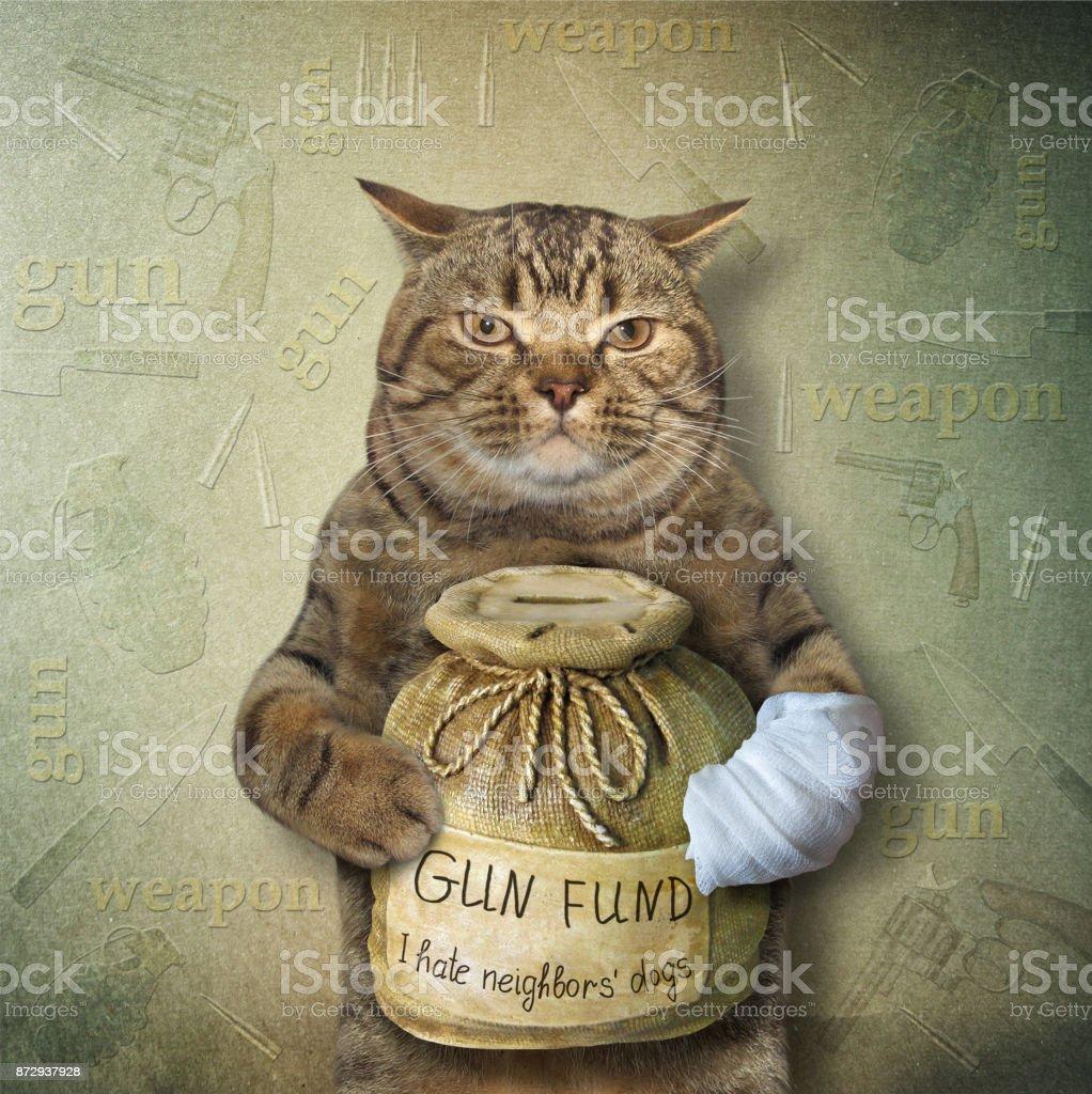 Cat wit a money box for gun 2 stock photo