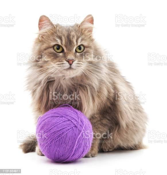 Cat with a ball picture id1131334611?b=1&k=6&m=1131334611&s=612x612&h=3bti0dcltgh0w0sctrrq3x9hg9kbx0s 5bt2bpilaq4=