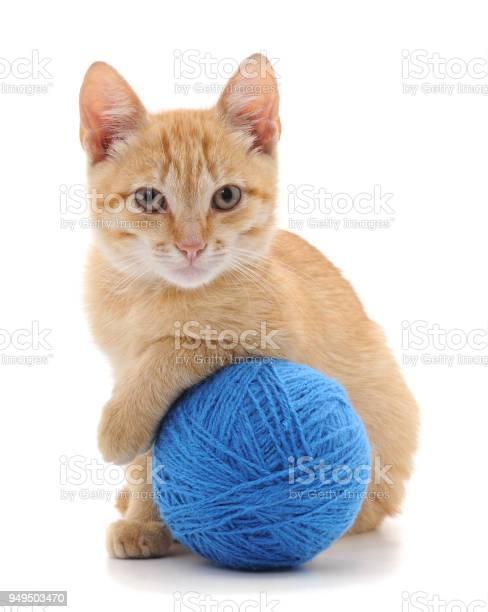 Cat with a ball picture id949503470?b=1&k=6&m=949503470&s=612x612&h=ytllj4avexsjttkshmzb 6awl16b8y6rjq4o8tf 4sw=