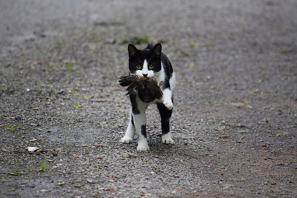Cat with a bird - foto de acervo