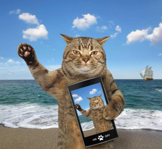 Cat with a cell phone picture id907927968?b=1&k=6&m=907927968&s=612x612&w=0&h=vnph6phda7xdunamlllerbxkf r3p9ijbbiajpgb9nu=