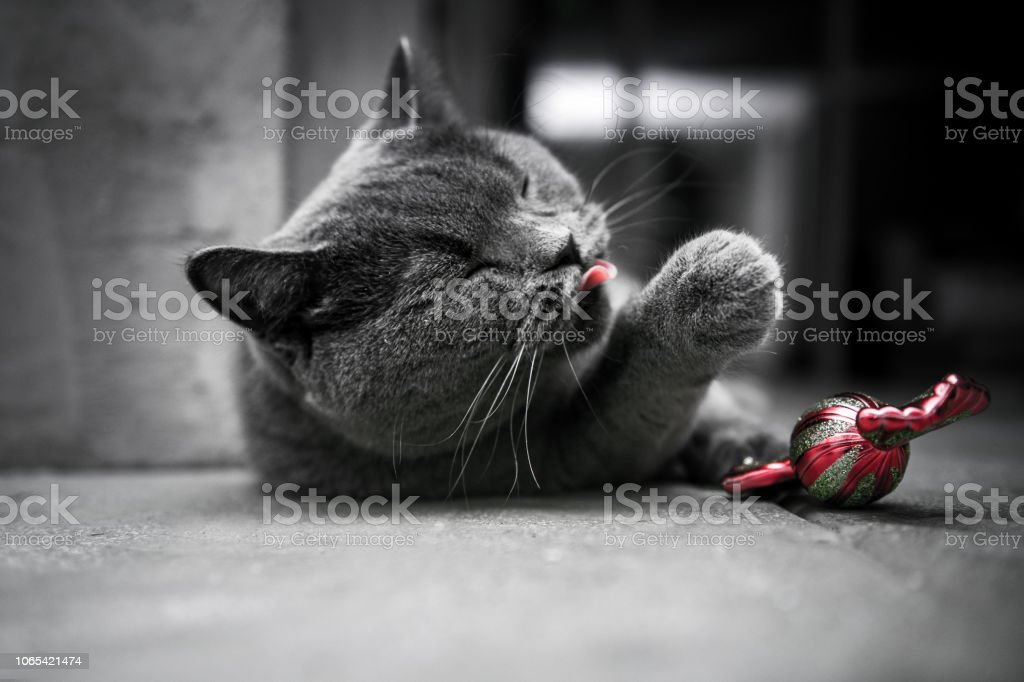 Cat with a Christmas Tree stock photo