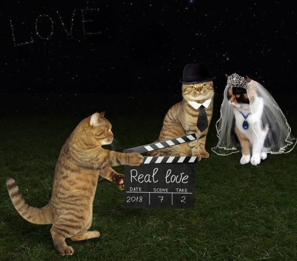 katze mit einer schindel und brautpaar - hochzeits thema hollywood stock-fotos und bilder
