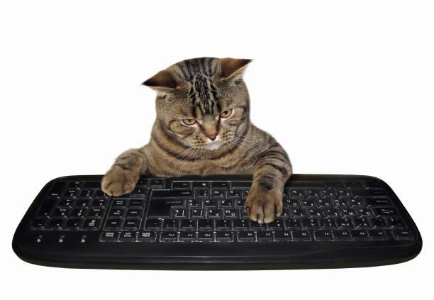 Cat with a computer keyboard picture id1012367132?b=1&k=6&m=1012367132&s=612x612&w=0&h=la2zrnp4fgjvt6hhi  jl zipfajhzhiw2m4kmouryw=