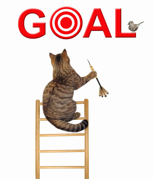 Cat with a dart on a ladder 2 stock photo