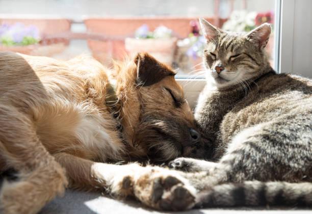 cat with a dog sleeping together – zdjęcie