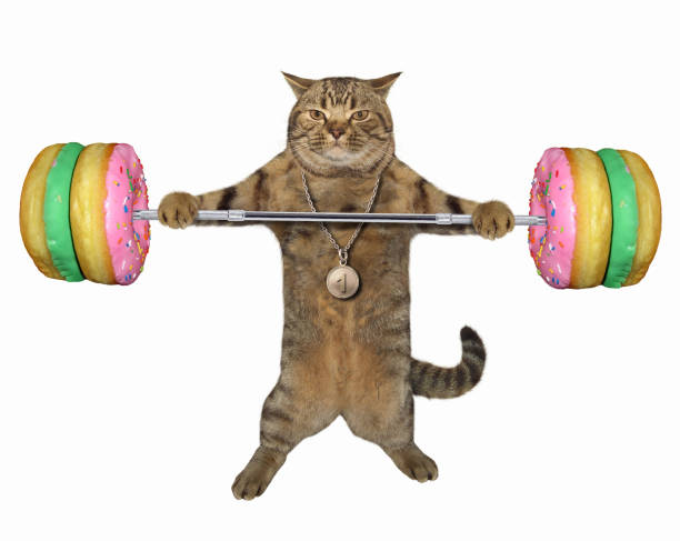 Cat with a donut barbell stock photo