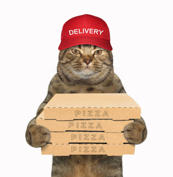 Cat with a few boxes of pizza stock photo