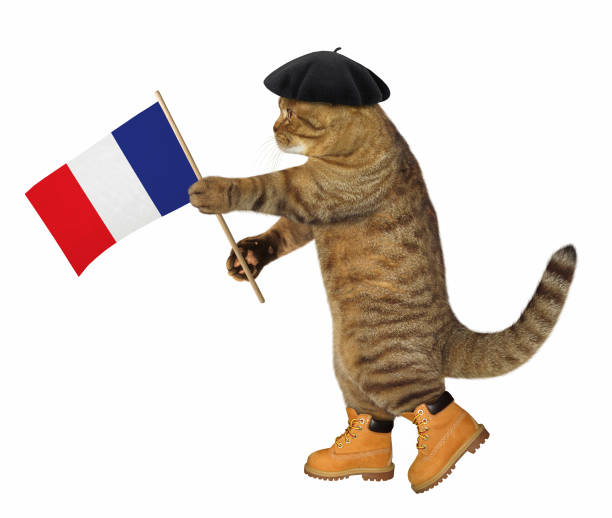 Cat with a french flag stock photo