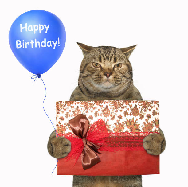 Cat with a gift box and a blue balloon stock photo