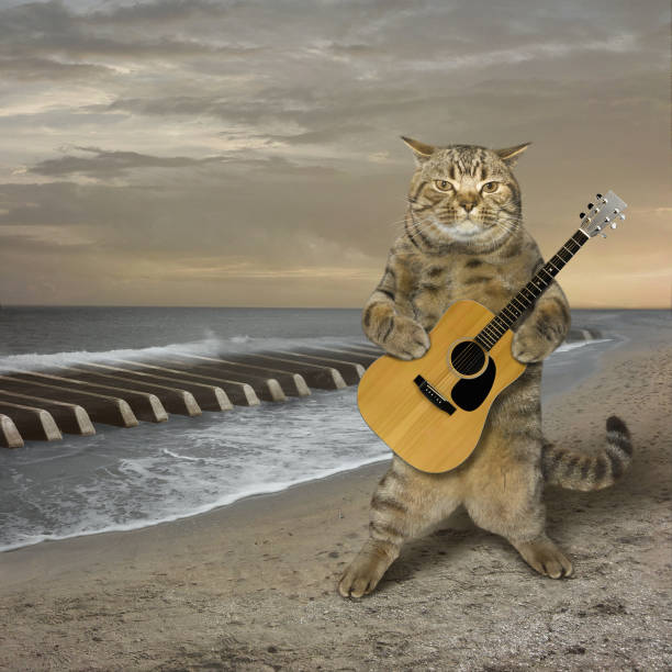Cat with a guitar on a beach stock photo