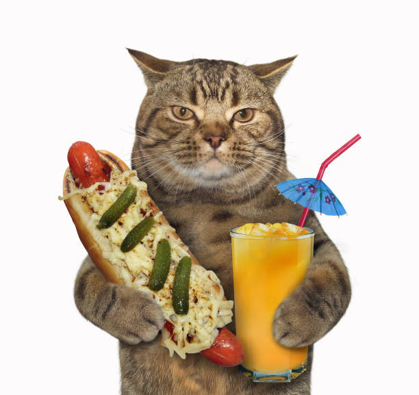 katze mit einem hot-dog und saft - gemüselaibchen stock-fotos und bilder