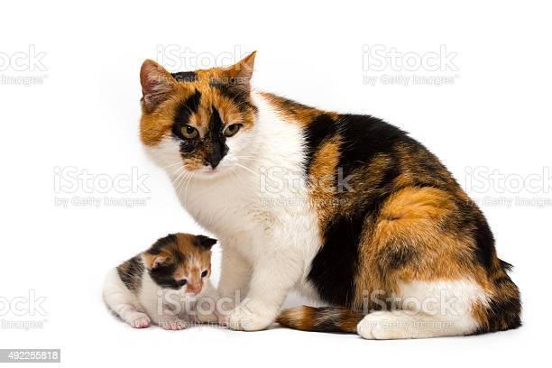 Cat with a kitten picture id492255818?b=1&k=6&m=492255818&s=612x612&h=lusypxe6vivt f32hiy8n7qkn6geokpwbwmgg6j89jw=