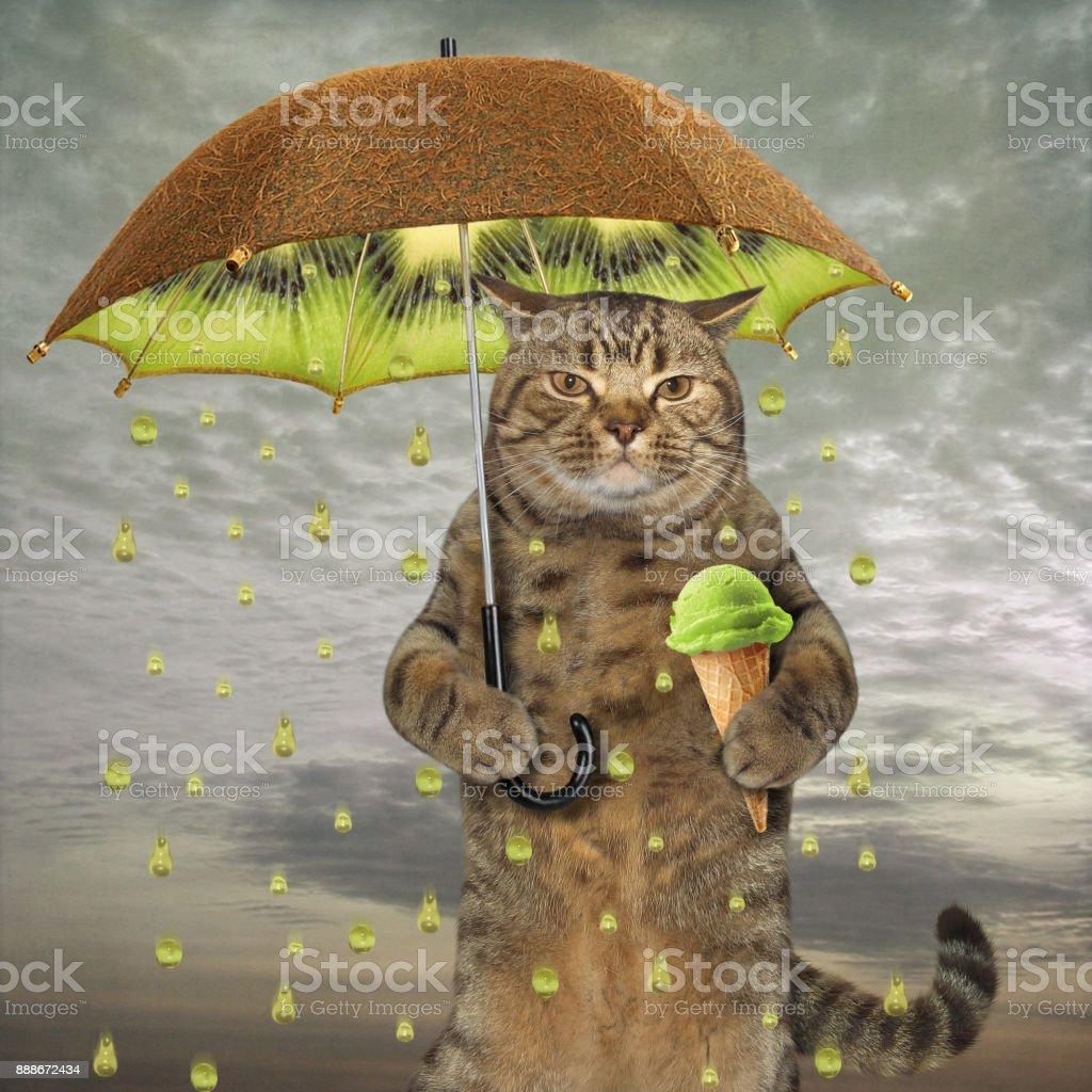 Cat with a kiwi umbrella stock photo