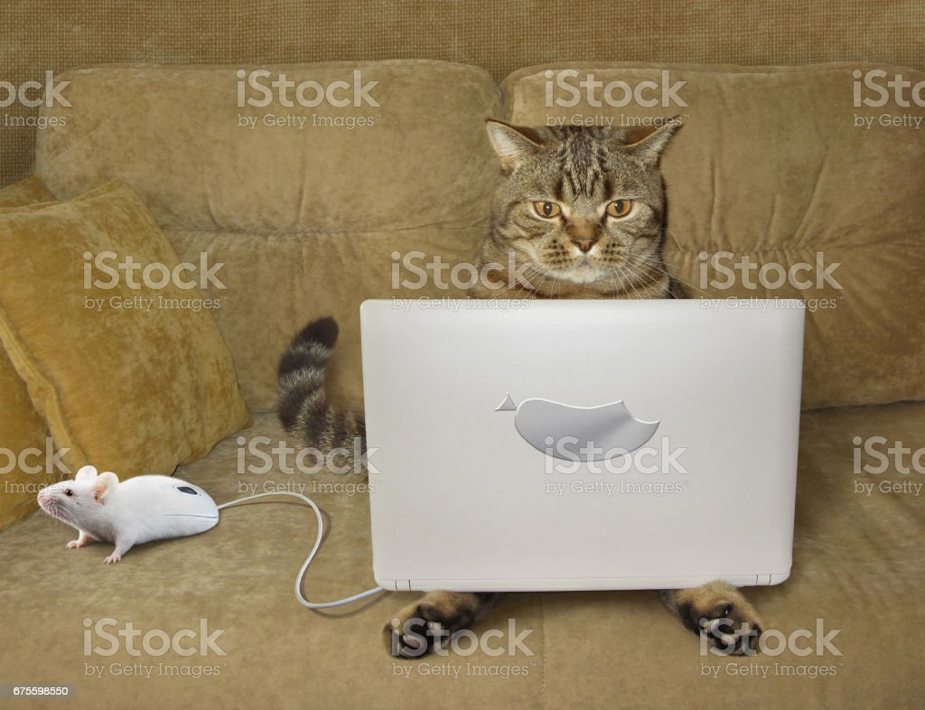 Cat with a laptop on a sofa stock photo