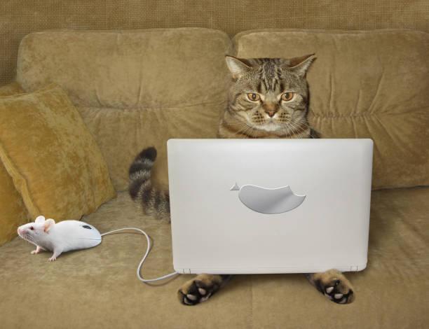 Chat avec un ordinateur portable sur un canapé - Photo