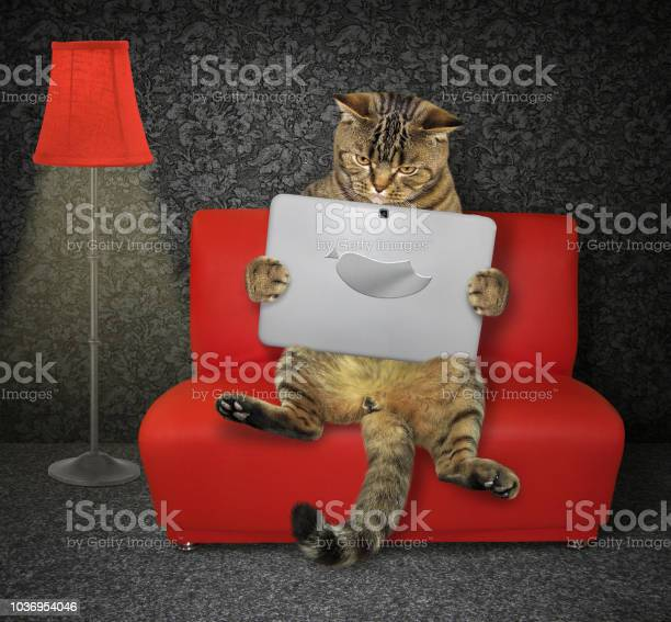 Cat with a laptop on the red couch picture id1036954046?b=1&k=6&m=1036954046&s=612x612&h=qyip72mc4xhvbhfogmouv0w7spd tg15 jsmiupxvqc=