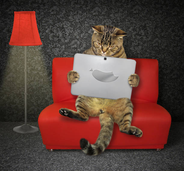 Cat with a laptop on the red couch stock photo