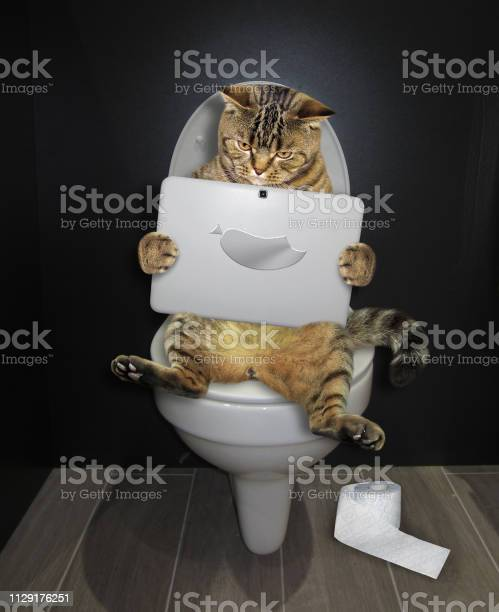 Cat with a laptop on the toilet picture id1129176251?b=1&k=6&m=1129176251&s=612x612&h=ktl6j7 wqhnppt1q5xeyqcpyk1mnsw7fdi5w7tskvvu=
