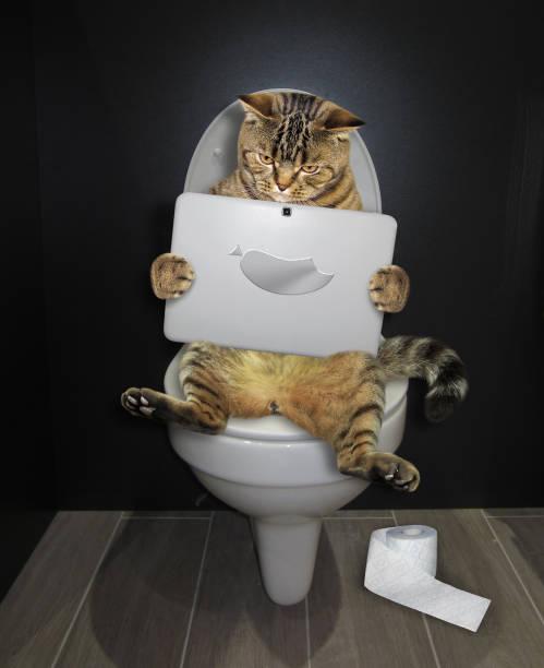 Cat with a laptop on the toilet picture id1129176251?b=1&k=6&m=1129176251&s=612x612&w=0&h=lftztpgjloaqox gdwgtnzhzscsazx963bnhv7xgbo8=