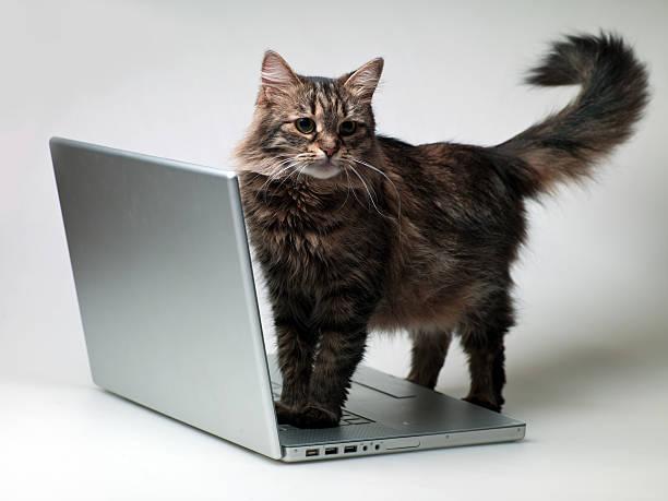 Cat with a laptop picture id174555215?b=1&k=6&m=174555215&s=612x612&w=0&h=gibualhk4xcuqisvl ywnfccenzq04v64hhdzzmi0 q=