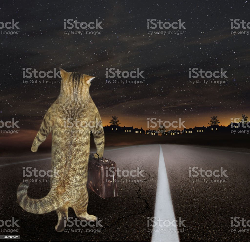 Cat with a mug of beer and fish stock photo