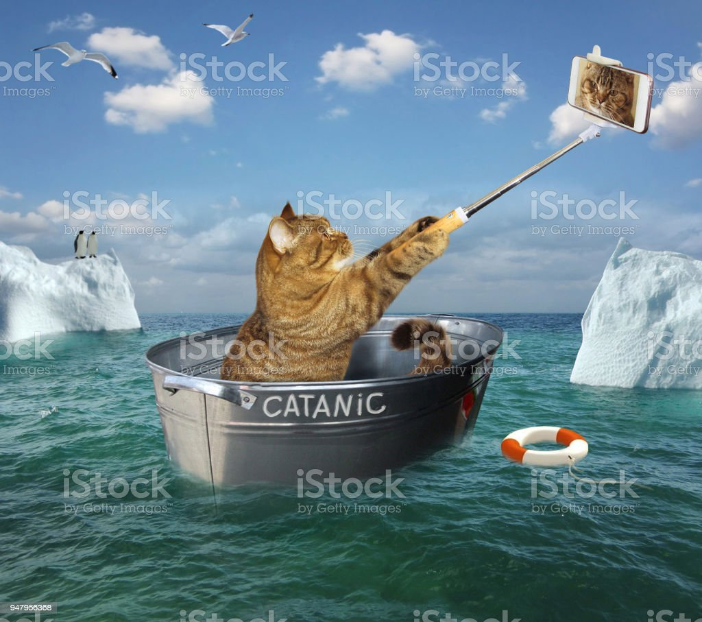 Cat with a phone on the boat stock photo