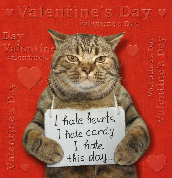 """Cat with a poster on his neck The poster is hanging around cat's neck. It says """" I hate hearts. I hate candy. I hate this day... """". cat valentine stock pictures, royalty-free photos & images"""