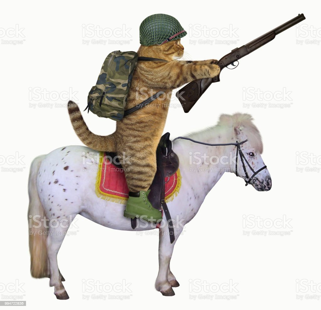 Cat with a rifle on a horse stock photo