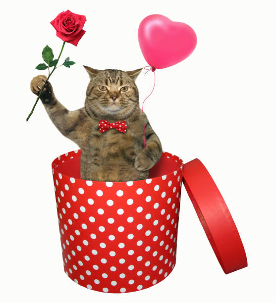 Cat with a rose in a gift box stock photo
