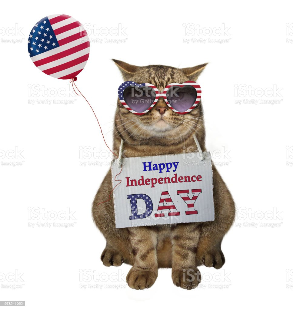 Cat with an American balloon stock photo