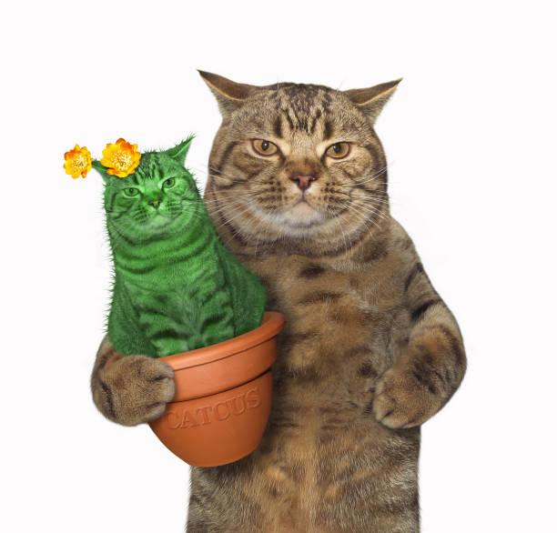 gato con un cactus inusual - mezcal fotografías e imágenes de stock