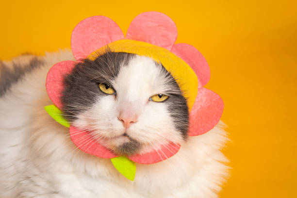 Cat With Attitude Wearing Flower Hat A cute cat wearing a flower hat squinting he eyes in disgust at the camera. sdominick stock pictures, royalty-free photos & images
