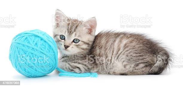 Cat with ball of yarn picture id476097065?b=1&k=6&m=476097065&s=612x612&h=avnbl1 pzhy8vzzbvblulge1e40v19fqfxmfzw 7t6a=